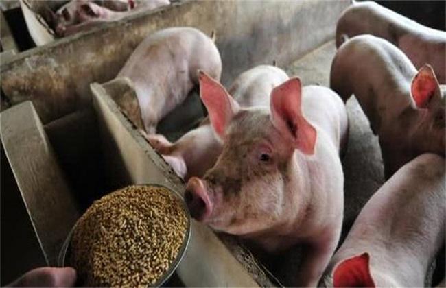 春季养猪 防疫要点