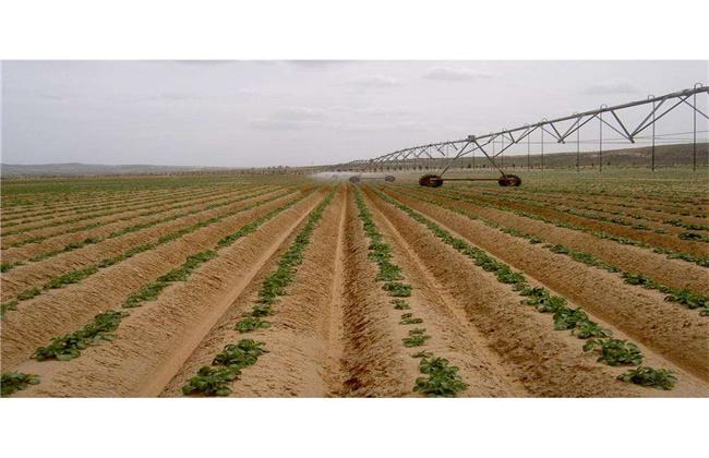 春季种植土豆高产栽培技术
