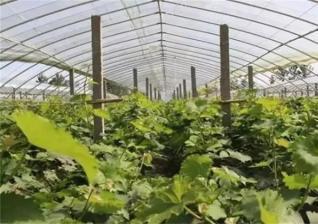 保护地栽培的特点