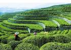 遵义绿色农产品进京招商逾百亿元