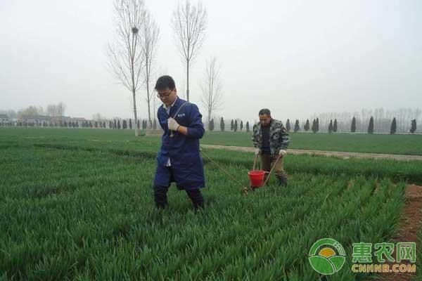小麦管理技术:怎样浇好小麦封冻水?