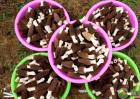 今年羊肚菌市场行情及种植前景分析