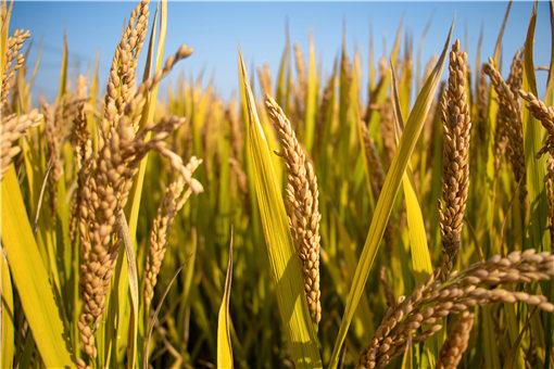 今年春天适合种哪些农作物?推荐这好多个!