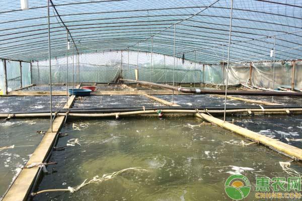 怎样培育好虾苗:虾苗换水过程