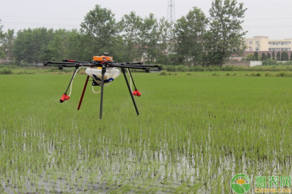 怎样做好水稻移栽?插秧期水稻移栽管理技巧