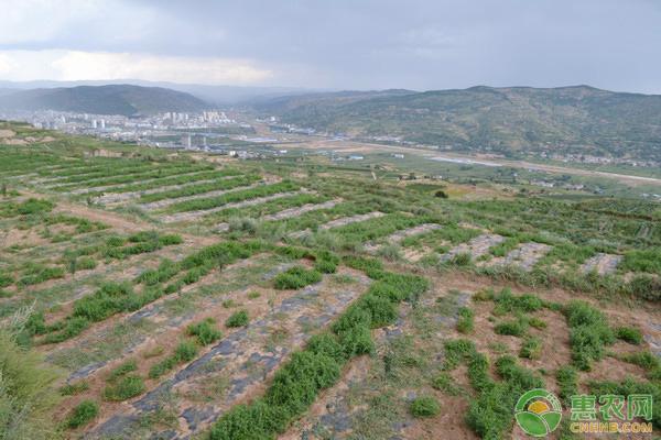 在山地上能建果园吗?都有什么利弊?