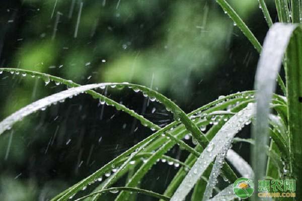 节气谷雨吃什么?有哪些讲究?
