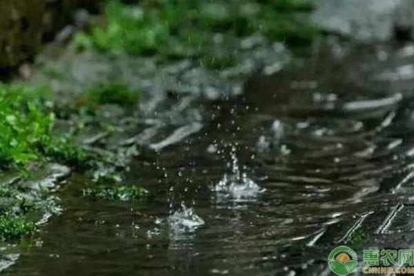 今年谷雨是几月几日?谷雨节气是怎么来的?