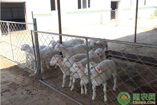 羊的体外寄生虫怎样预防与治疗?有哪些表现形式?