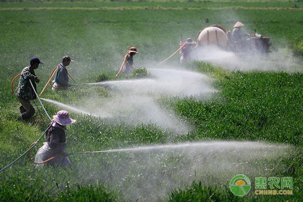 冬小麦不一样时期的浇水时间及要点介绍