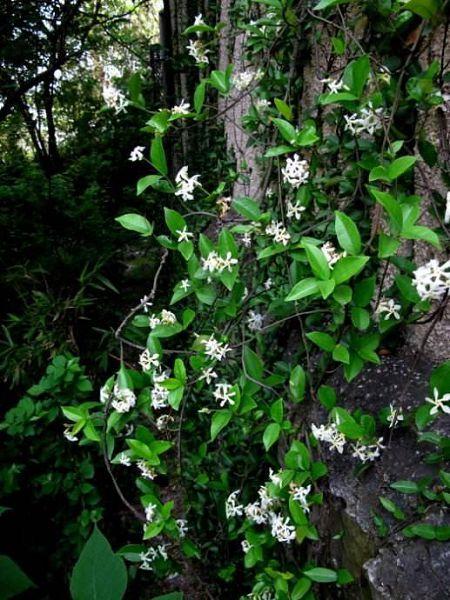 這些花卉做成花墻,簡直不要太美,夏天還能夠隔熱乘涼
