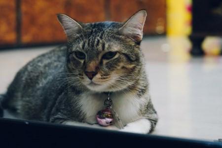 绿萝猫能吃吗图片