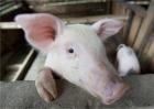 浅谈猪场建设中混凝土池体结构裂缝(2)