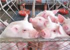 现代化猪场的主要设备有哪些?