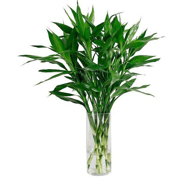 冬季养什么植物好,养这几种,冬季让家里生机勃勃