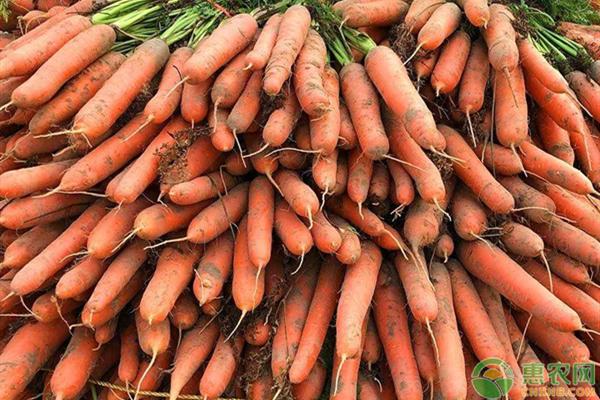 2020年胡萝卜价格多少钱一斤?影响胡萝卜价格因素分析