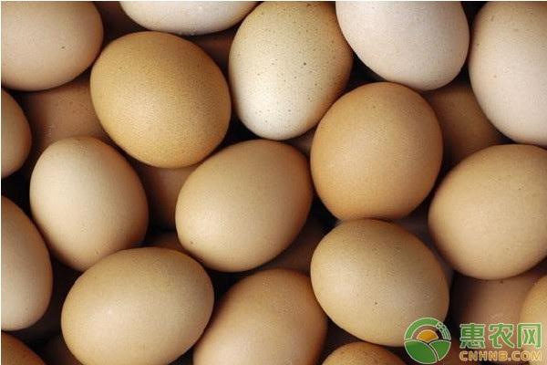 五一期间的鸡蛋行情是怎样?附今日鸡蛋价格介绍