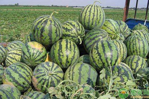 中国最好吃的七大西瓜产地
