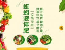 哈密瓜种植技术 种植方法 田间管理