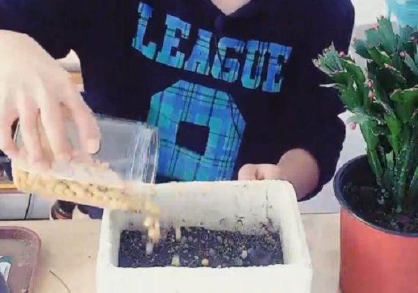 蟹爪兰底肥用什么最好