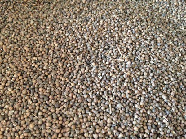 一亩地需要多少斤风铃花种子?