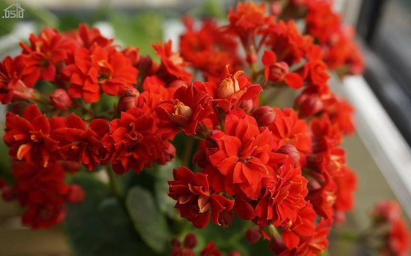 四季常开的室内盆花有哪些