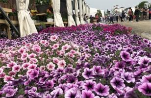 保定适合养什么花,市花和市树是什么