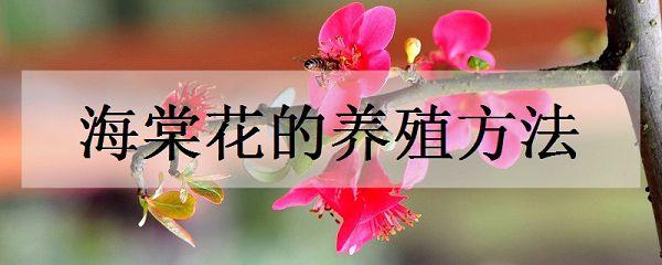 海棠花的养殖方法是什么