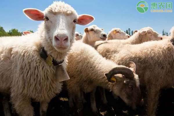 养10头奶山羊一年的利润是多少?提高产奶量的方法有哪些?