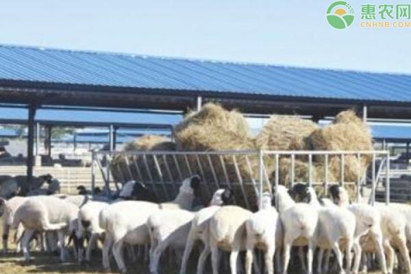 养殖羊的利润与成本是多少?2021养羊的前景分析
