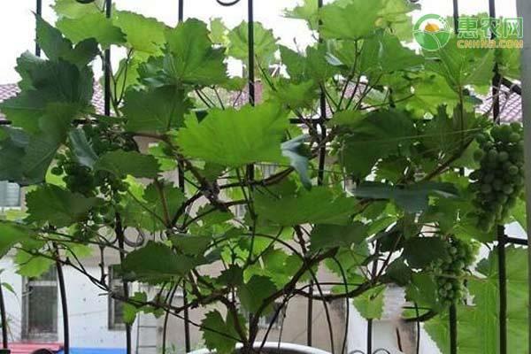 家庭小型室内养殖项目有哪些?