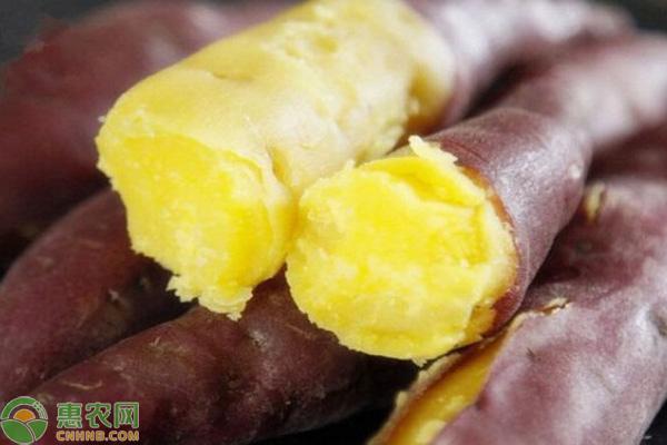 板栗红薯多少钱一斤?市场前景如何?(附种植技术)