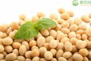 2020年大豆价格行情怎么样了?为啥大豆不会大幅上涨?