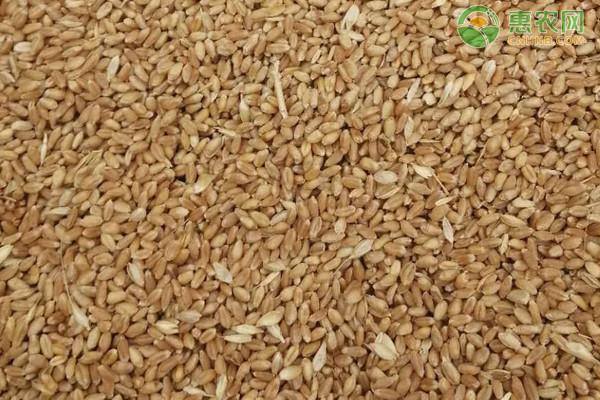 小麦价格多少钱一斤?2021年4月13日小麦最新行情价格走势