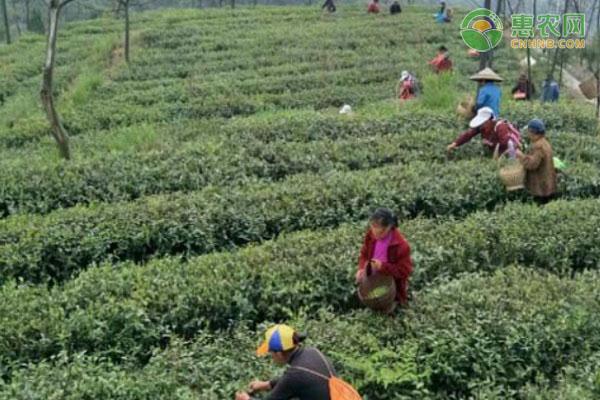 茶林征收怎么补偿?每亩地补多少钱?